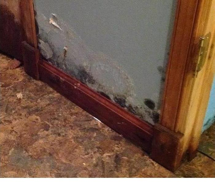 Mold Remediation Spring Mold Allergies